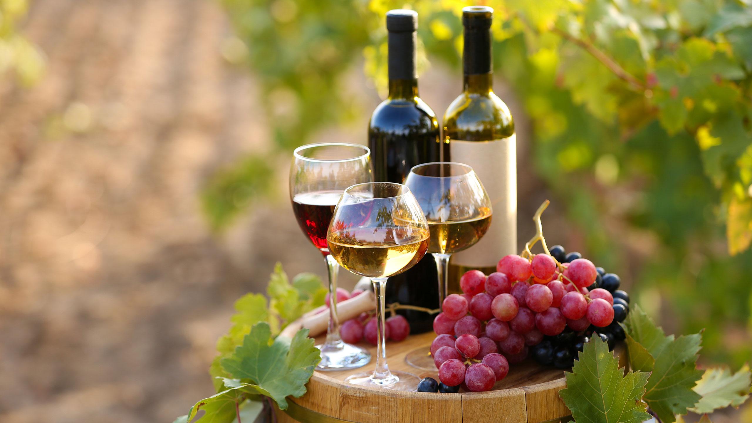 Vinhos Biológicos – Sim? Não? Porquê?